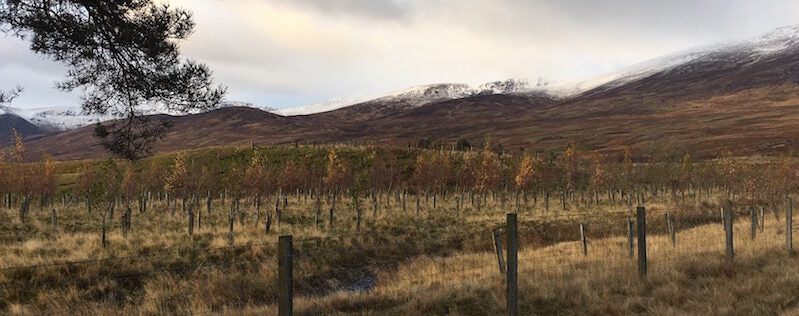 Greenr carbon offsetting project - reforestation in Talla & Gameshope, Scottish Borders
