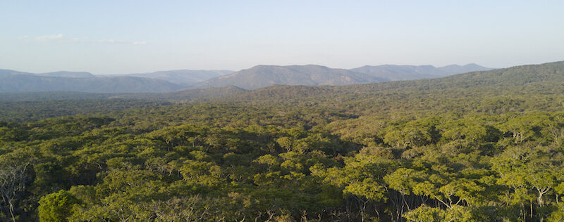 Greenr carbon offsetting project - reforestation in Ntakata, Tanzania