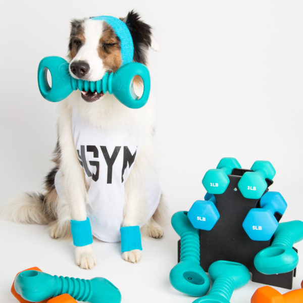 Squeaky Dumbbell Toy