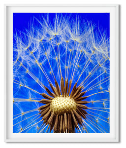 DANDELION WHEEL | PHOTOGRAPH | POSTER | SHADES OF WHITE & SKY BLUE - Kat Charles & Josephine