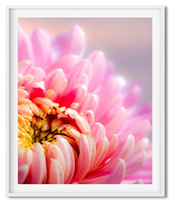 FOR THE LOVE OF DAHLIA | PHOTOGRAPH | POSTER | SHADES OF PINK, ORANGE & YELLOW - Kat Charles & Josephine