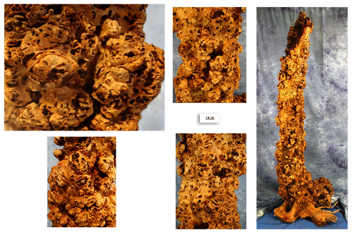 Maple Burl column 2