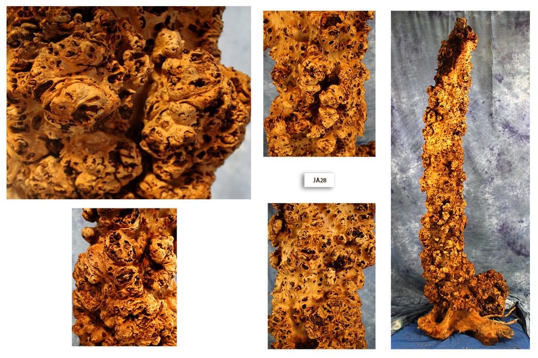 Maple Wood Burl Column JA28
