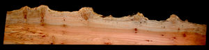 Maple Burl Wood Live Edge Slab MA2046I
