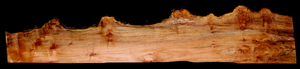 Maple Burl Live Edge Slab