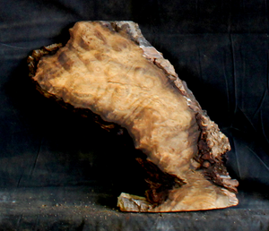 Myrtle Natural Edge Burl for Table or Resin Art