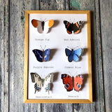 The Butterfly Downloadable Wall Art Pack