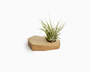 Wooden Airplant Holder Maple