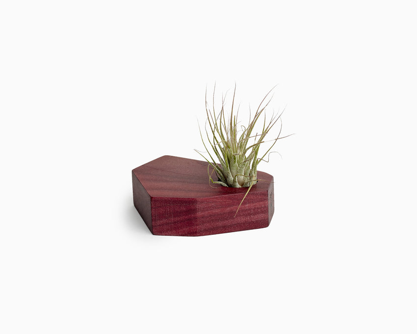 Wooden Airplant Holder Purpleheart