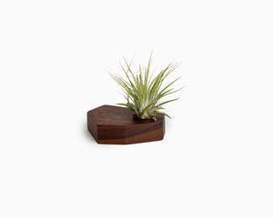 Wooden Airplant Holder Walnut