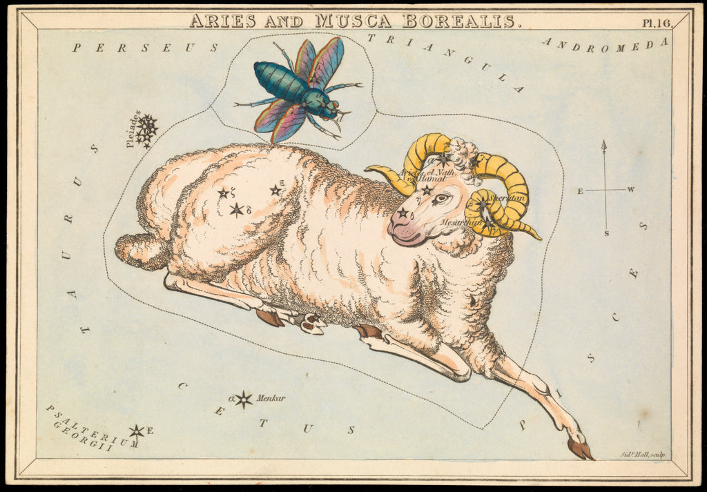 Detail of Aries and Musca borealis by Sidney Hall