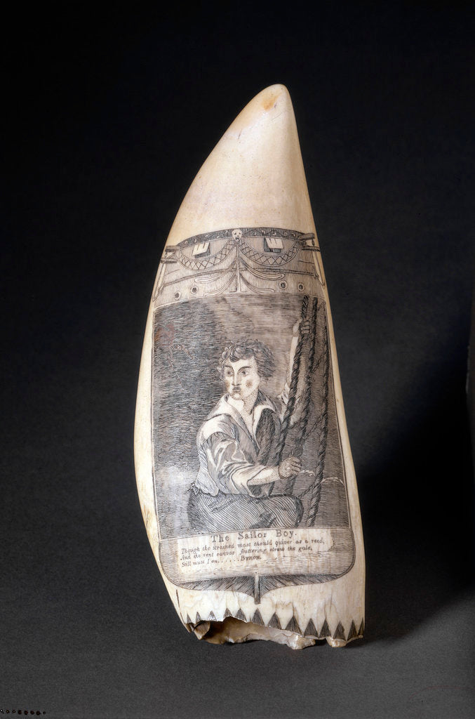 Detail of Scrimshaw whale tooth