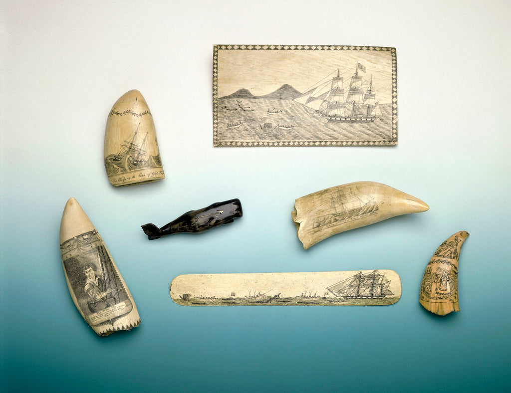 Detail of Engraved sperm whale's tooth by unknown