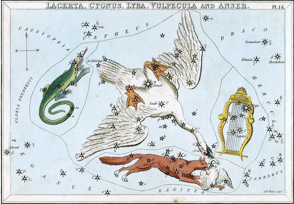 Lacerta, Cygnus, Lyra, Vulpecula and Anser by Sidney Hall