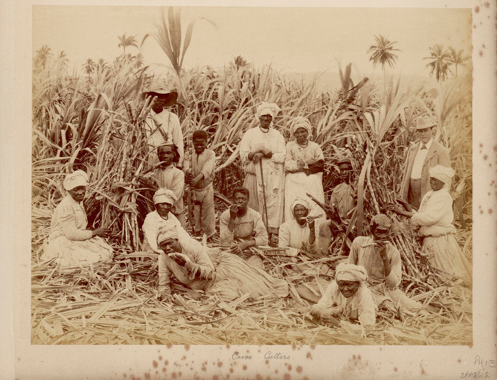 Detail of Sugar-cane cutters in Jamaica by unknown