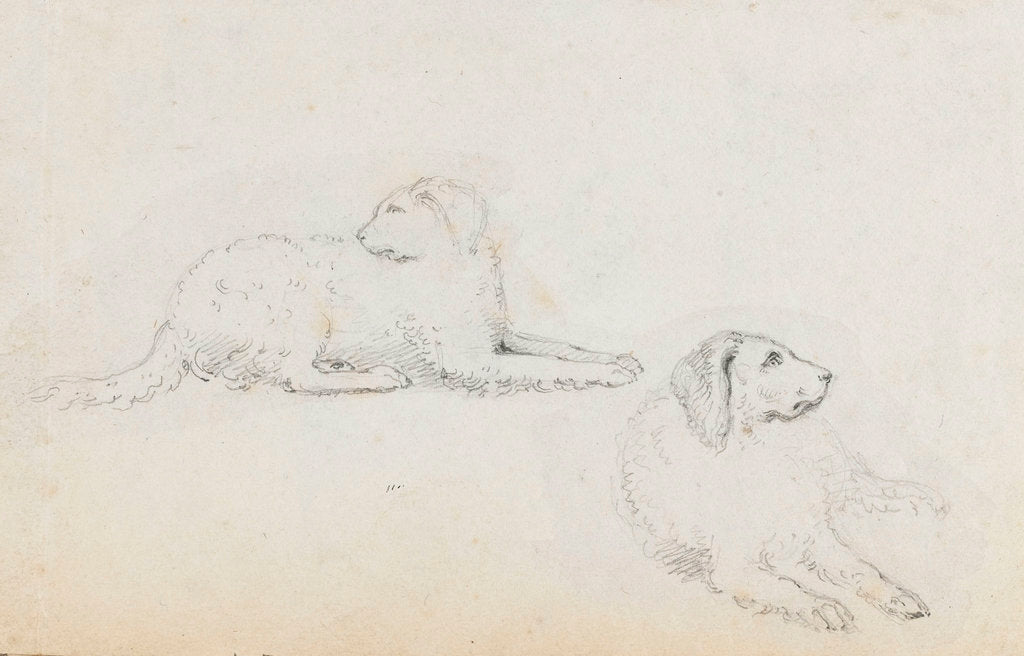 Detail of Studies of Nelson's dogs (recto) by Thomas Baxter