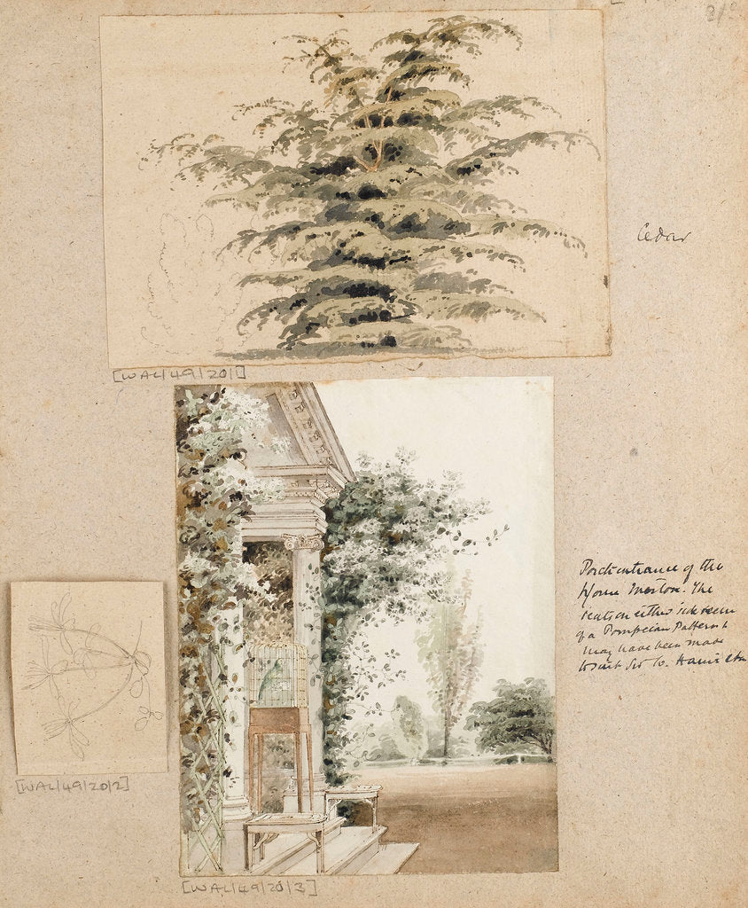 Detail of Study of a cedar tree by Thomas Baxter