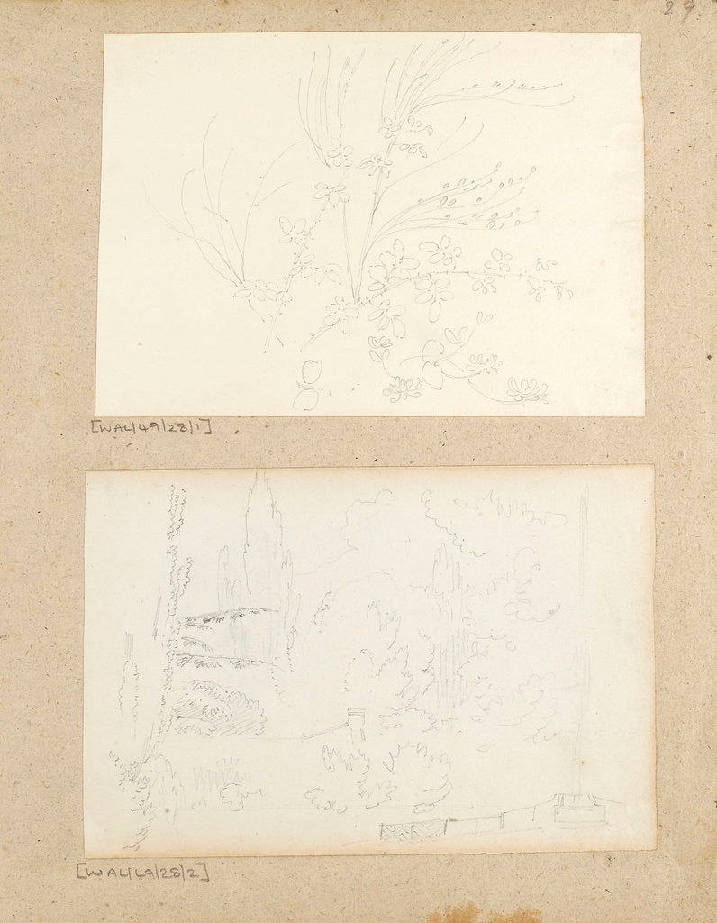 Detail of Studies of garden plants including rose foliage and honeysuckle by Thomas Baxter