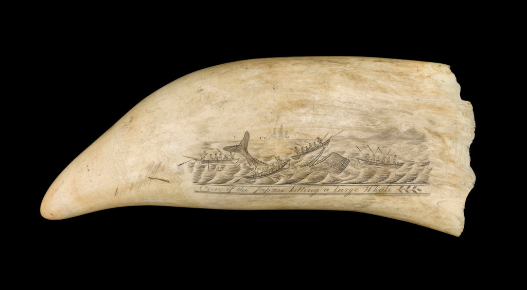 Detail of Whale tooth by unknown