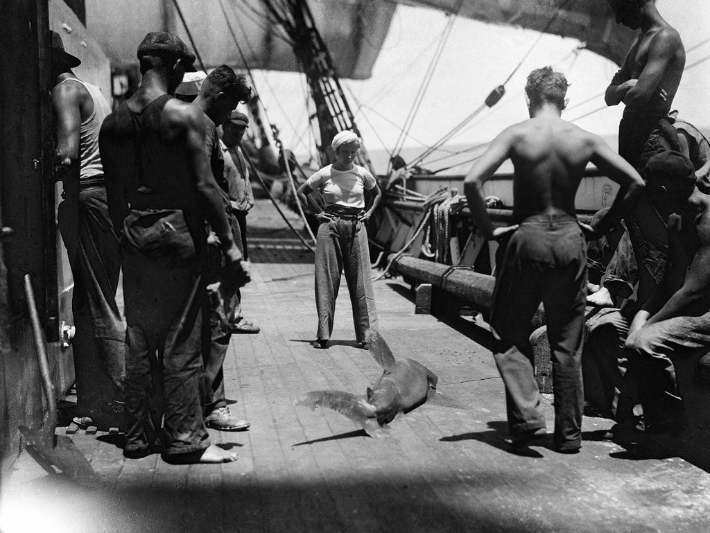 Detail of Shark on the main deck, caught by the crew by Alan Villiers