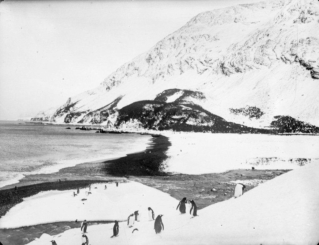 Detail of A view along the shore with penguins in the foreground, South Georgia Island by unknown