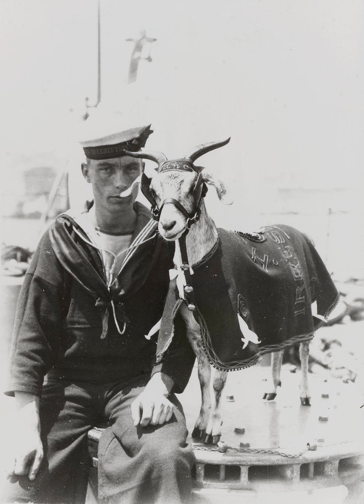 Detail of Goat mascot on board the HMS 'Irresistible' (1898) in Malta by unknown