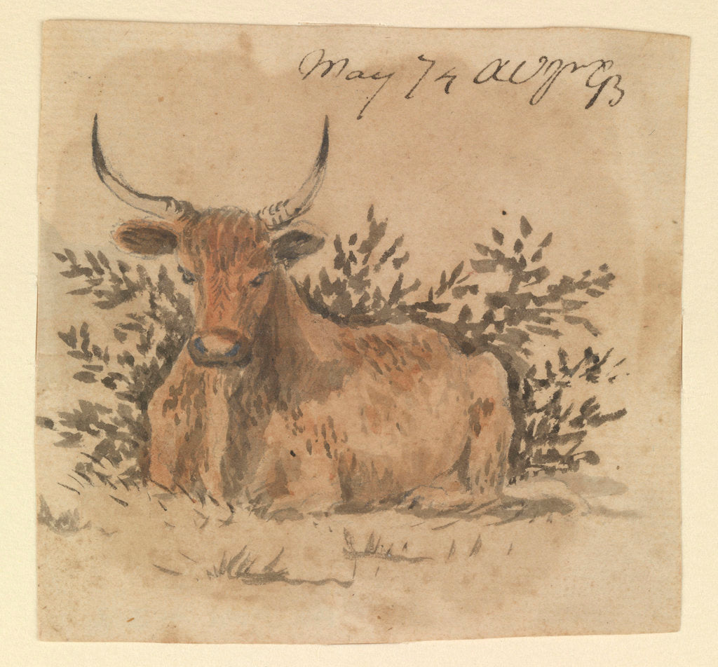 Detail of A cow, lying down by Gabriel Bray