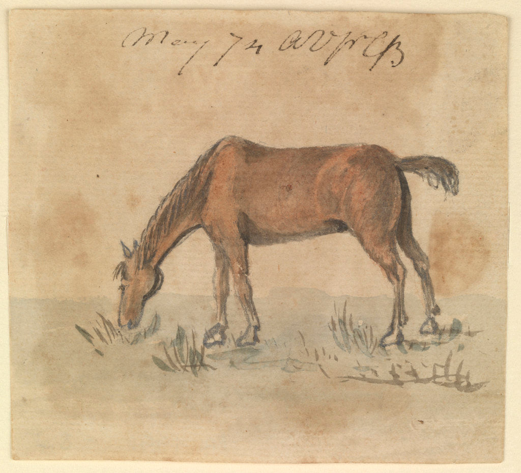 Detail of A grazing horse by Gabriel Bray