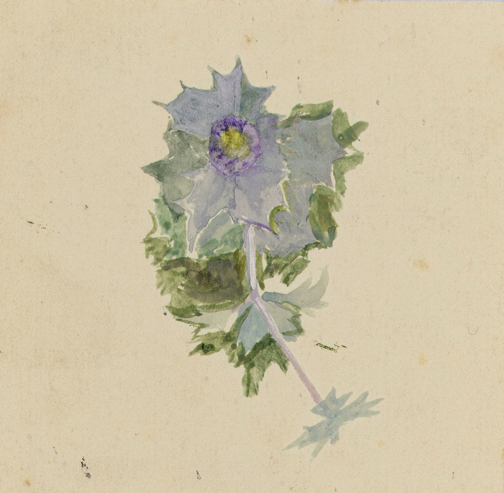 Detail of Blue flower with mauve centre, possibly sea holly by William Lionel Wyllie