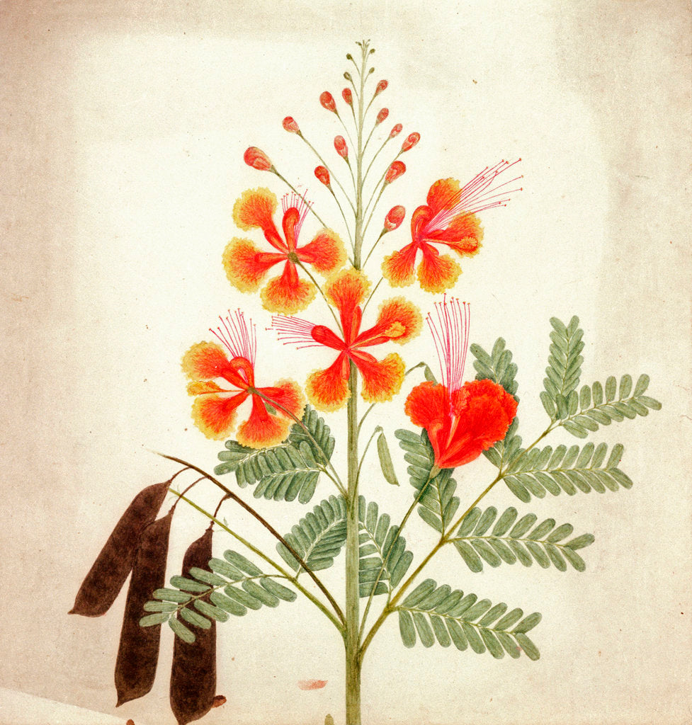 Detail of Flower study by Nicholas Tomlinson