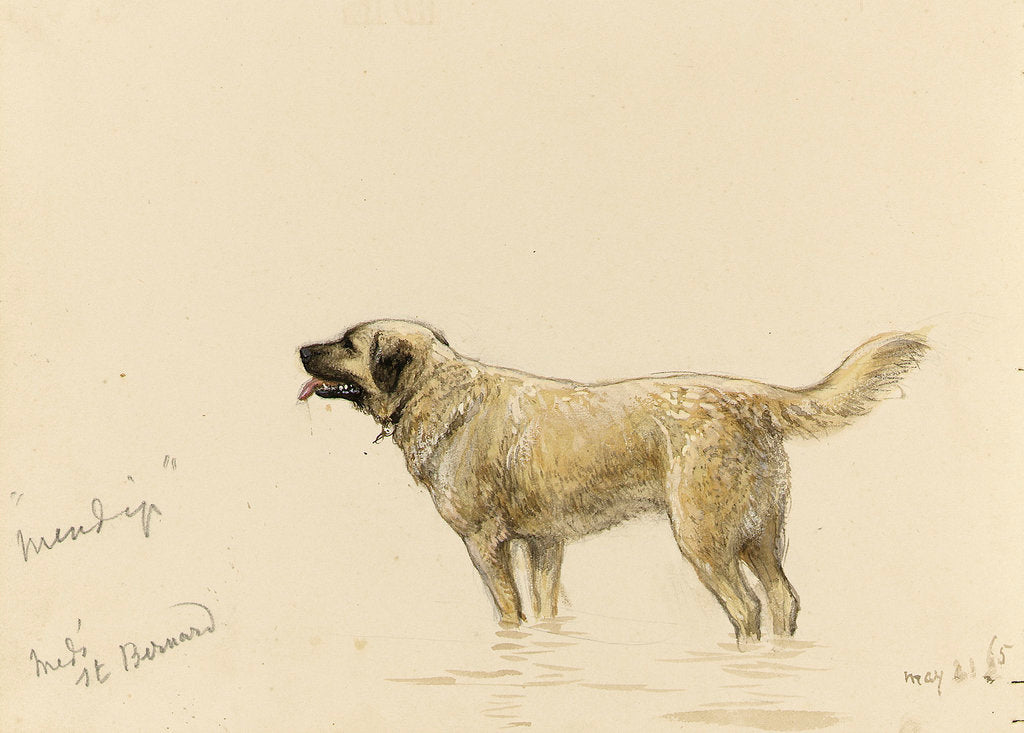 Detail of 'Mendip' Megs St Bernard dog by John Brett