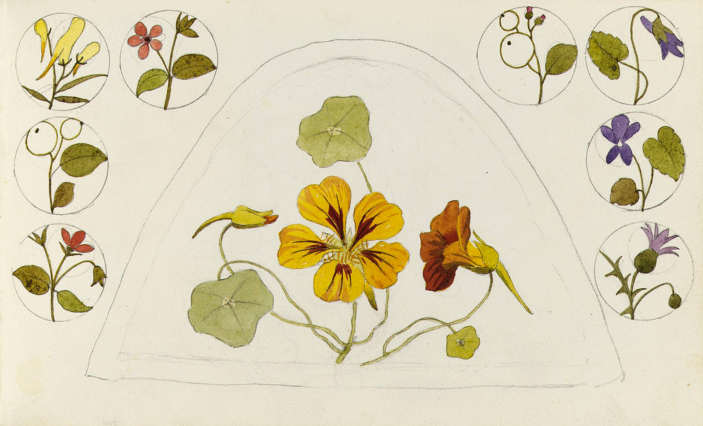 Detail of Designs with nasturtiums and other flowers by Rosa Brett
