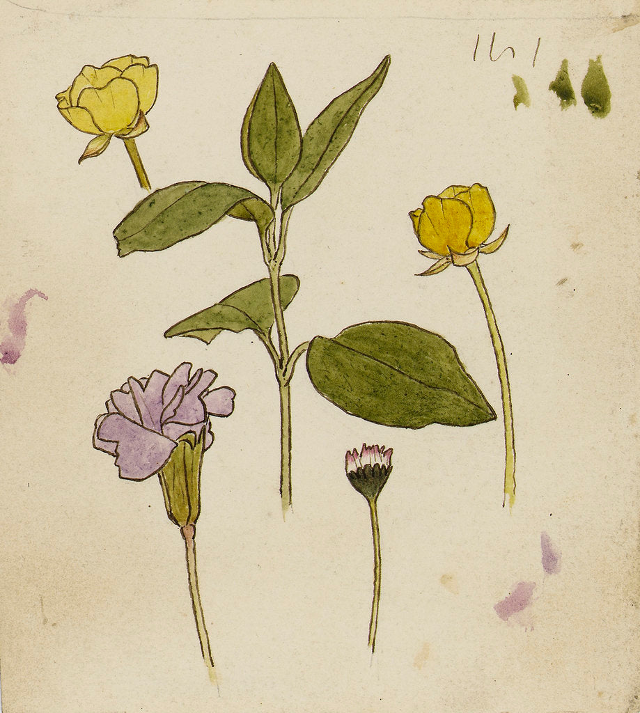 Detail of Study of flowers - buttercup and daisy by Rosa Brett