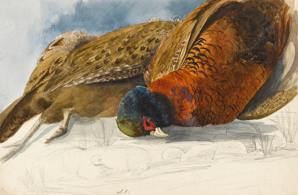 Detail of Study of a brace of pheasants by Matilda Rose Herschel