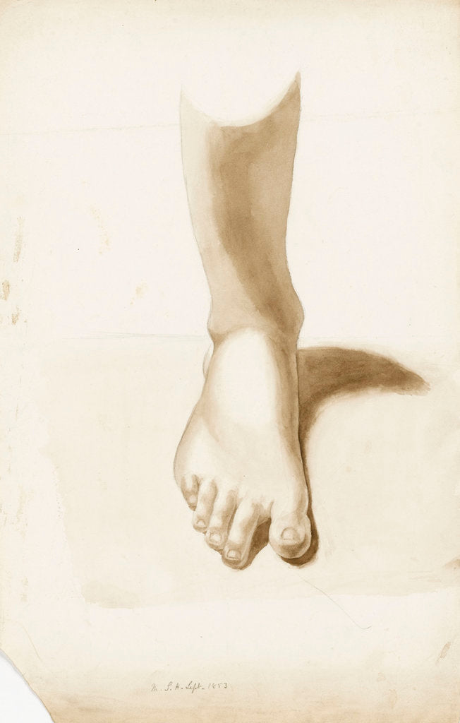 Detail of Study of a foot and ankle by Margaret Louisa Herschel