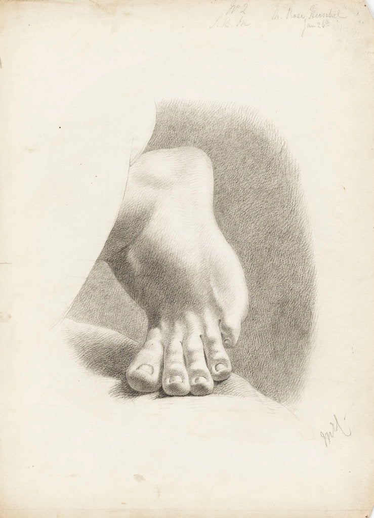 Detail of Study of a foot with toes bent by Matilda Rose Herschel