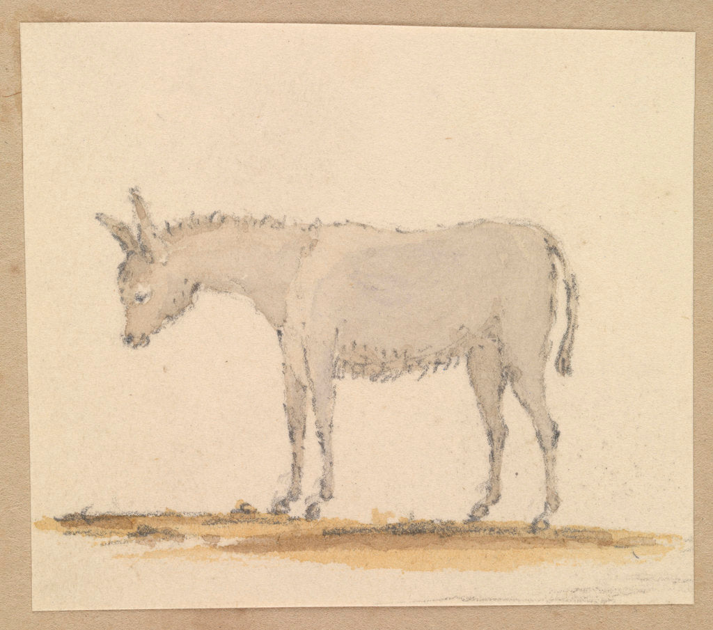 Detail of Study of a donkey by Robert Streatfeild
