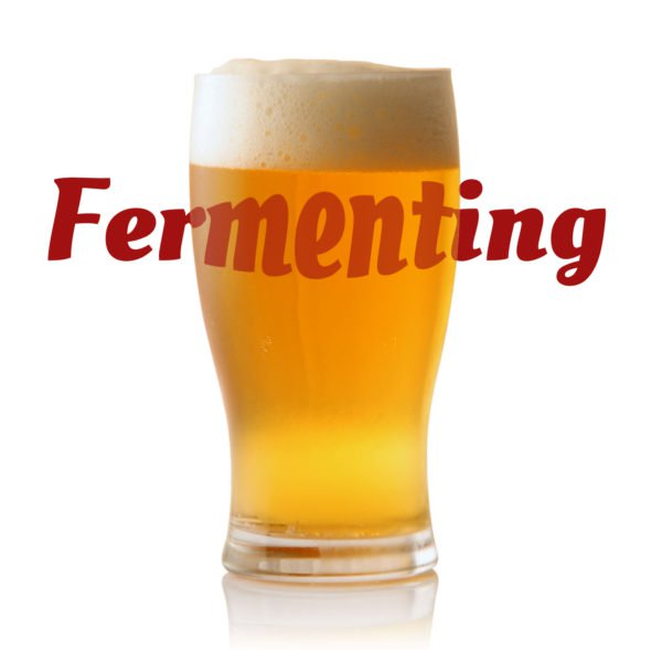 Step 3: Fermenting your beer