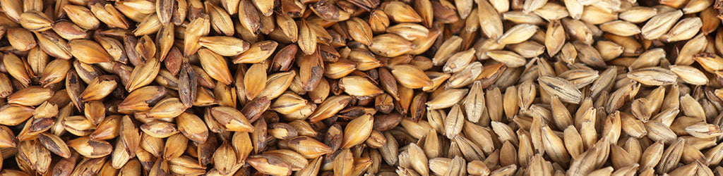 Malted Grains for Homebrewing