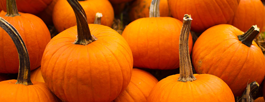 How to Make Smashing Pumpkin Ale with Real Pumpkin