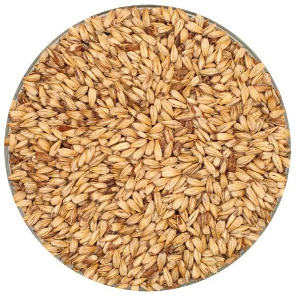 Briess Caramel 10L Malt