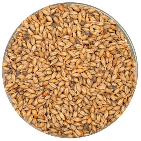 Detail view of Crisp Amber Malt