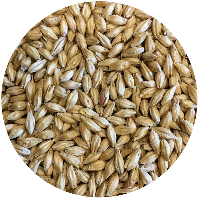 Close-up of Mecca Grade Pelton Pilsner-style Malt