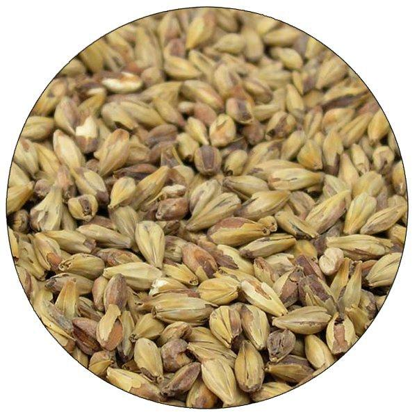 Briess Special Roast malt in a close-up view