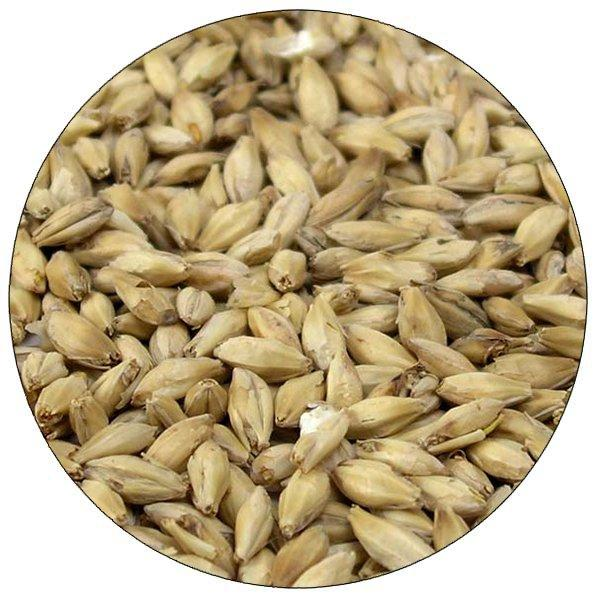Briess Organic 2-Row malt in a close up view