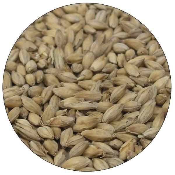 Detail-view of Warminster Floor Malted Maris Otter malt