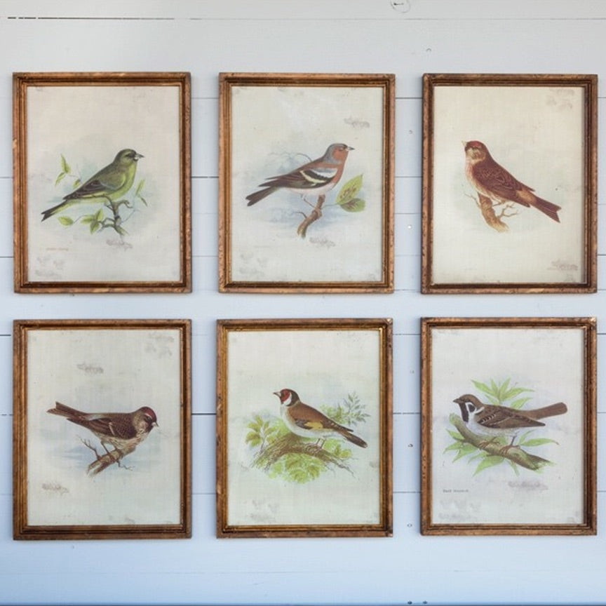 Vintage Bird Framed Print