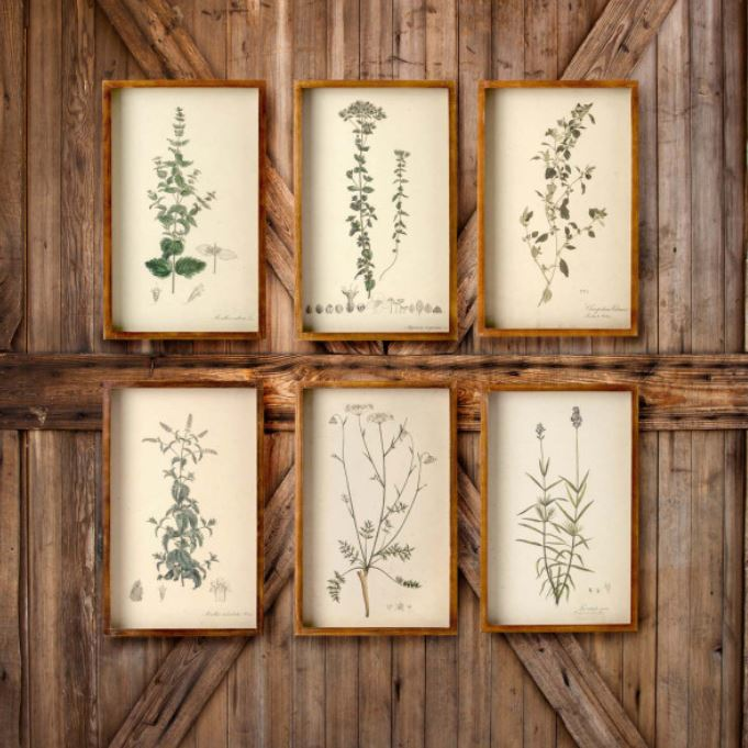 Collected Botantical Prints- Set of 3