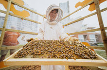Beehive Sponsorship A - Level 2 Community Hives