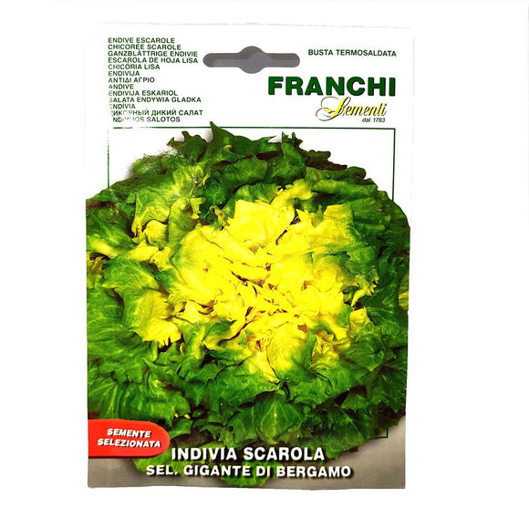 Franchi - Indivia Scarola - Seeds-The Italian Shop
